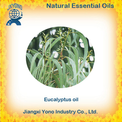 Eucalyptus Globulus oil 80% Pharmaceutical Grade Food Grade